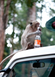 This guy hopped in the truck and claimed an empty Fanta bottle, to the horror of some more timid little children who decided they'd rather wait in the truck.