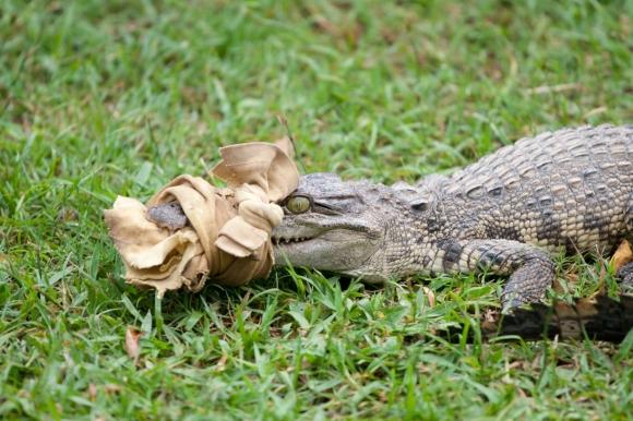 Mr. Croc O. Dile